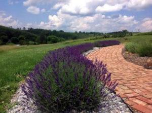 About Us – Mystic River Lavender